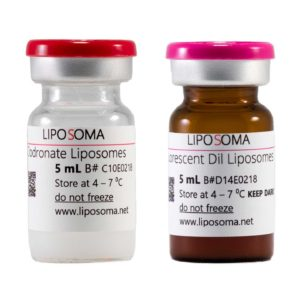 clodronate-liposomes_fluorescent-dil-liposomes